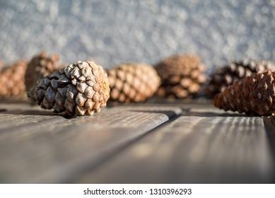 Pine Cones Outdoors