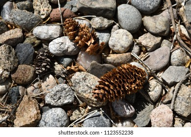Pine cones and pebbles