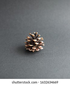 Pine (conifer) cone,  seed cone,  ovulate cone on grey background