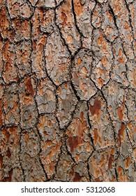 Pine cork background