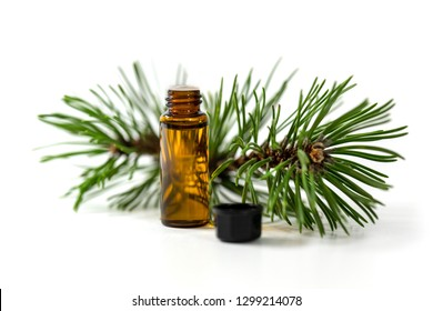 pine essential oil bottle and tree branch isolated on white background