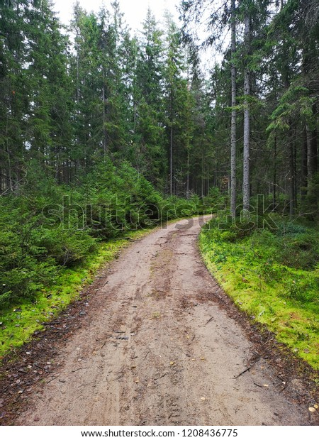 pine and fir forest