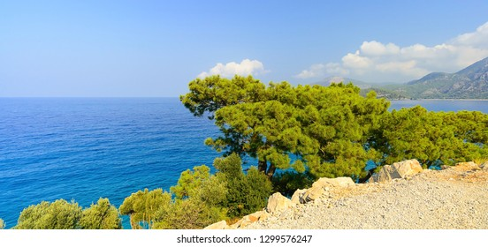 Pine with a flat crown growing on a cliff near the sea, Turkey, green conifer tree, growing on stones, against the background of the blue sea, sunny summer