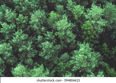 Pine forest from the above