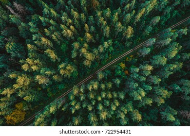 Pine forest from above, fall season, forest road - Shutterstock ID 722954431