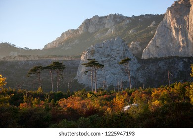 Pine forest against the backdrop of the mountains