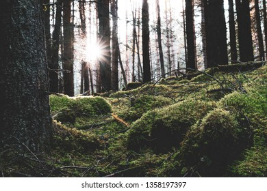 A pine forest along the Cateran trail in Perthshire, Scotland