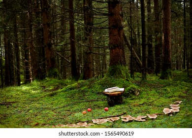pine forest with book and apples
