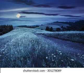 pine forest by the road through  hillside meadow in high mountains at night in full moon light
