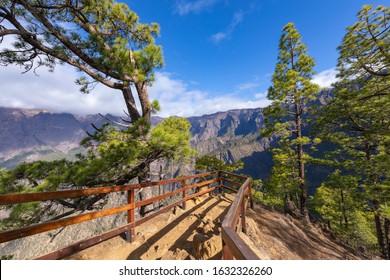 Pine forest at Caldera de Taburiente National Park. Viewpoint La Cumbrecita, La Palma, Canary Island, Spain.
