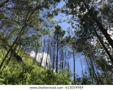 pine forest gunung andong yogjakarta stock photo edit now