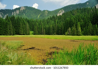 Pine forest with lake in Eastern Europe