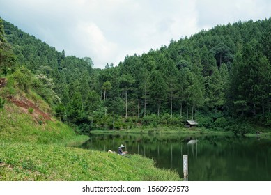 Pine forest lake, Situ Walukut