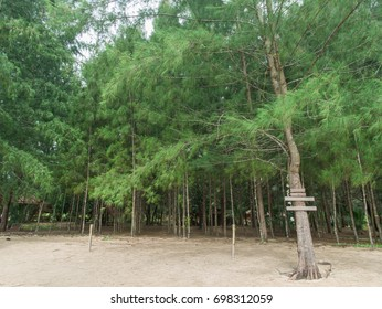 Pine forest on the beach with empty signs hang in the tree