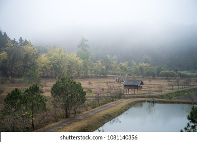 pine forest on a foggy morning at Ban Wat Chan Royal Project Development Center ,Chiang Mai