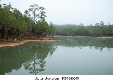 pine forest on a foggy morning with reflections on the reservior at Ban Wat Chan Royal Project Development Center ,Chiang Mai