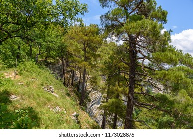 Pine forest on the mountainside. Eagle Nest in Sochi, Russia