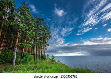 Pine forest on the shore of the Ob Novosibirsk reservoir. Ob river, Novosibirsk region, Western Siberia, Russia
