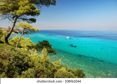 pine forest over sea in greece