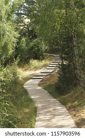 pine forest path on the Curonian Spit in Nida, Lithuania