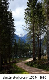 pine forest road with Achensee lake