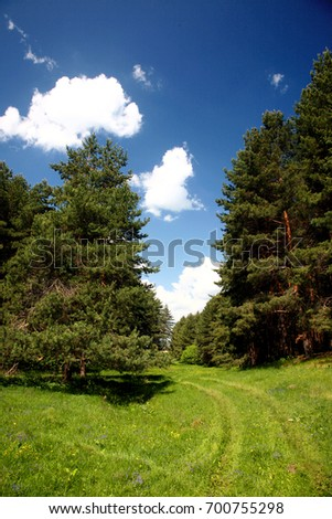 The pine forest and the road, natural landscape, summer, August