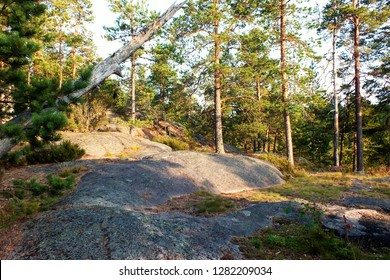 pine forest with a stone hill on a sunny summer day in national park Nuuksio, Finland