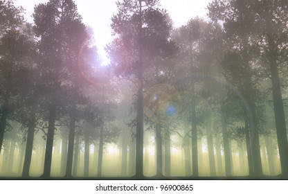 Pine forest and sun shining through the trees