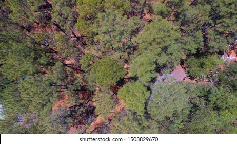 pine forests as a forestry industry in Asia. Pine forests and natural tourist sites. Aerial plantation in Indonesia.