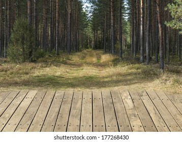 Pine green forest with wooden floor background
