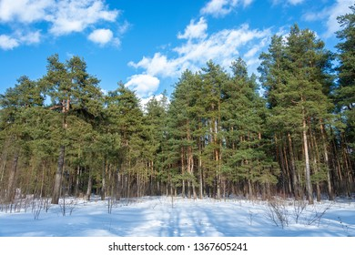 Pine Grove on a sunny March day with white clouds against a blue sky.