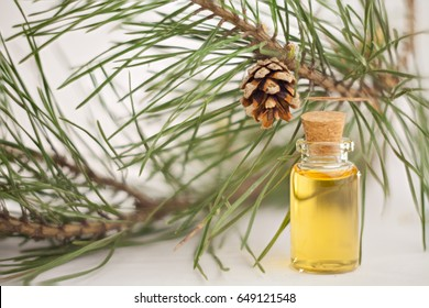 Pine infusion
