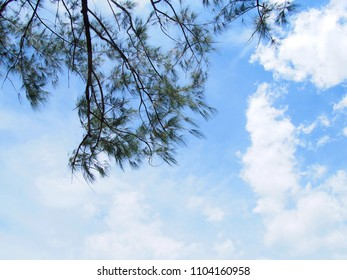 pine leave on the  branch  with sky background