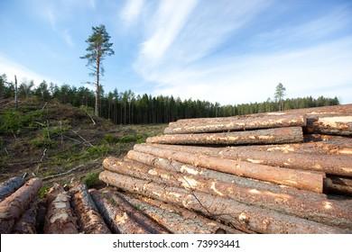 Pine logs, industrial way to get reniewable resources