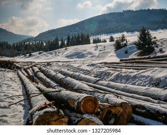 Pine logs near pine forest, conceptual image of deforestation in Transylvania, Romania  at wintertime.