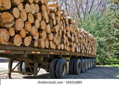 pine logs on logging flatbed trailer