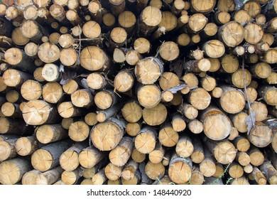 Pine logs prepared for shipment folded in stock
