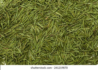 pine needles in the picture as a background