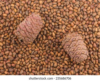 pine nuts and cones background