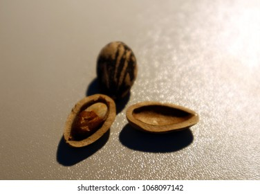 Pine nuts with open and closed shells on white background.