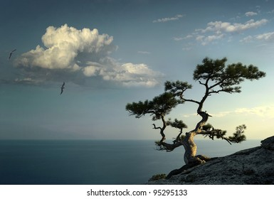 pine on the mountain in Crimea