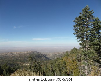 Pine on a ridge in the mountains above the high desert, California