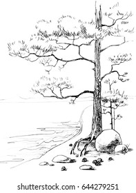 Pine on the seashore. Feather ink. Background image, graphic illustration