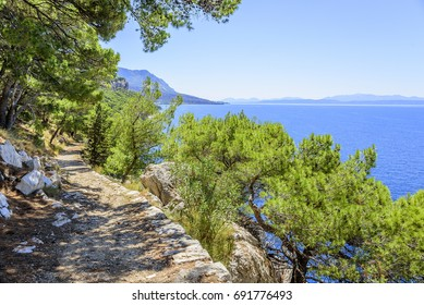 Pine on the shore of the blue sea. Adriatic Sea, Croatia.