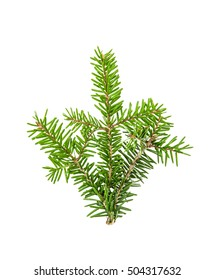 Pine sprig. Branches of christmas tree isolated on white background. Fresh green fir branches - Shutterstock ID 504317632