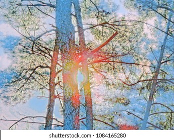 pine tree background sunset