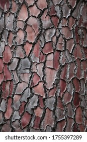 pine tree bark texture close up view, high resolution natural background