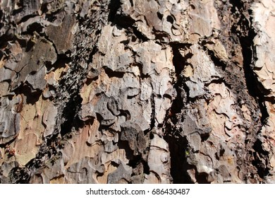 Pine tree bark/Bark/Texture