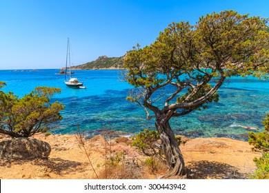Pine tree in beautiful sea bay near Roccapina beach, Corsica island, France
