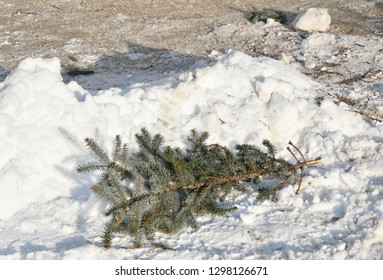 Pine tree branch in the snow